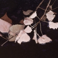 Glistening Branch